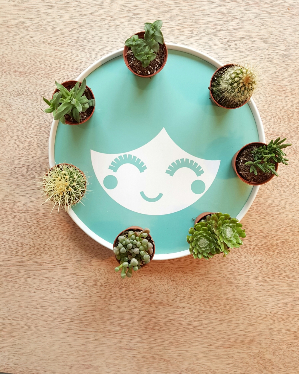 Simple Succulent Cacti bowl: How to make your own.